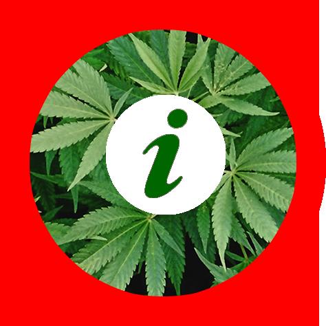 Cannabis Info - information culture et dangers du cannabis